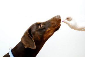 giving dog pill.jpg.838x0_q67_crop-smart