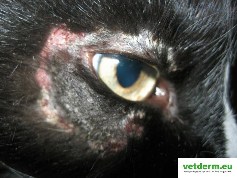 Dermato Salumae (3)